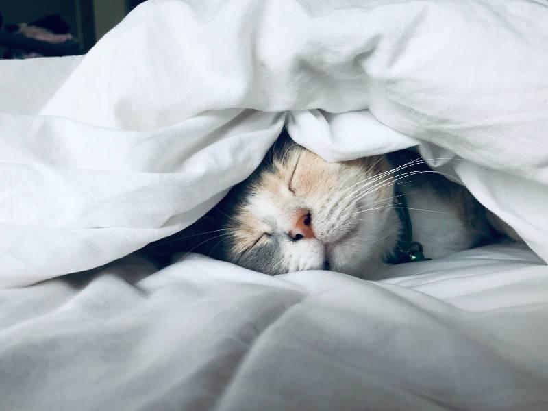 朝起きた時と夜寝る前の時間だけはポジティブにのアイキャッチ画像